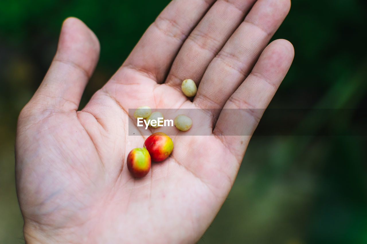 Cropped Hand On Man Holding Organic Coffee Beans