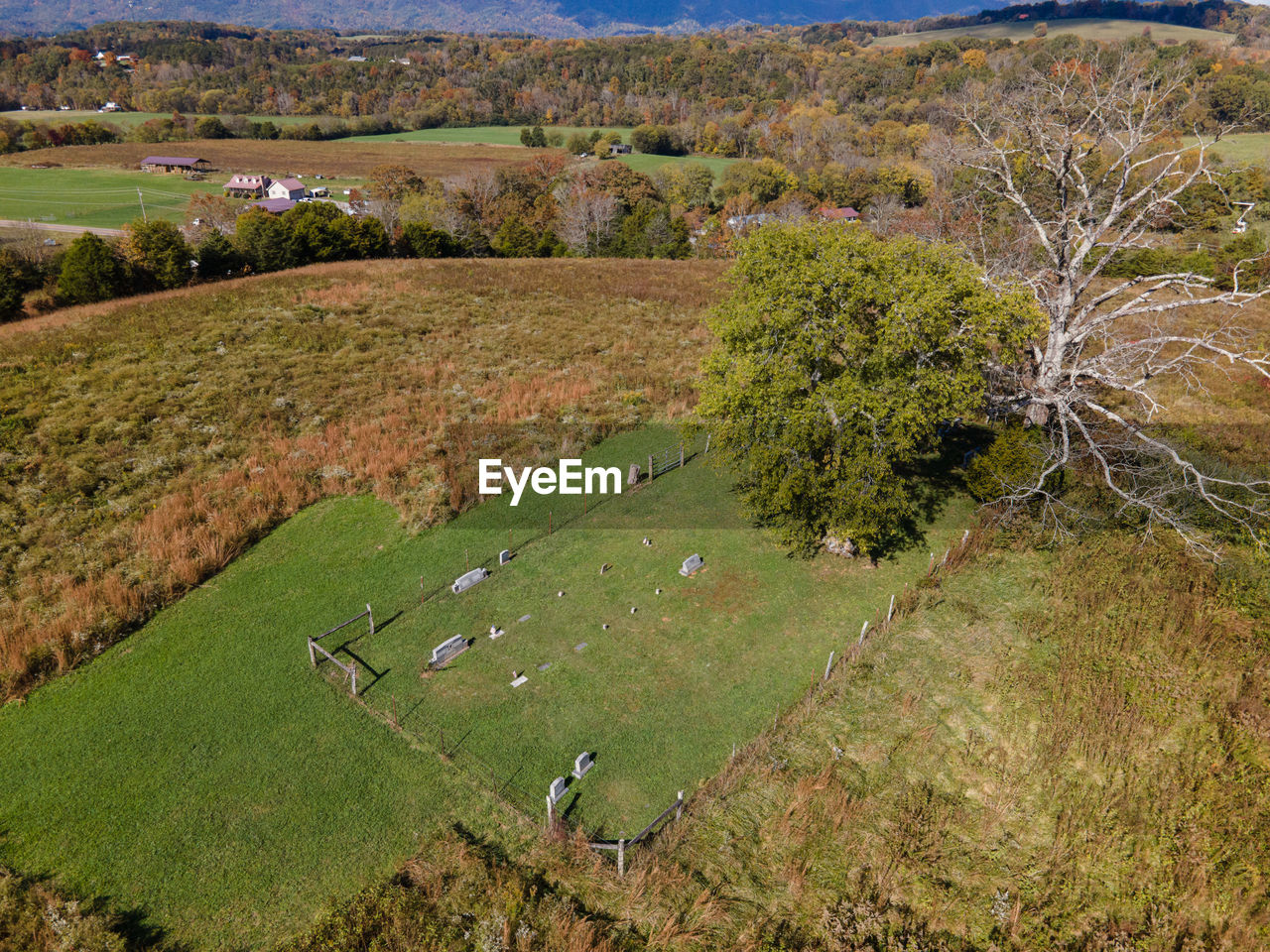 HIGH ANGLE VIEW OF TREES GROWING IN FIELD