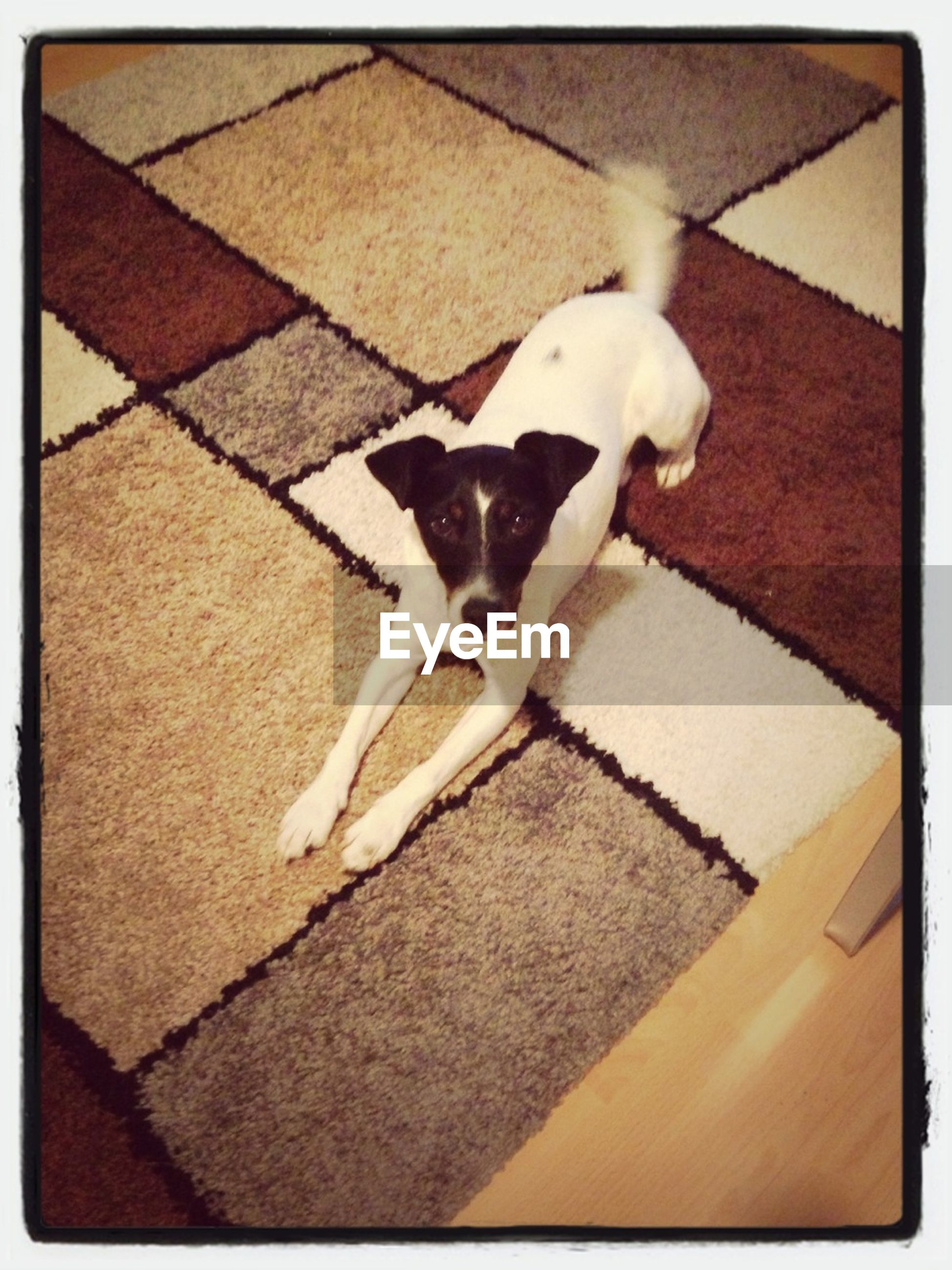 animal themes, domestic animals, pets, one animal, mammal, transfer print, domestic cat, high angle view, dog, cat, auto post production filter, full length, feline, white color, vertebrate, no people, looking at camera, zoology, animal, shadow