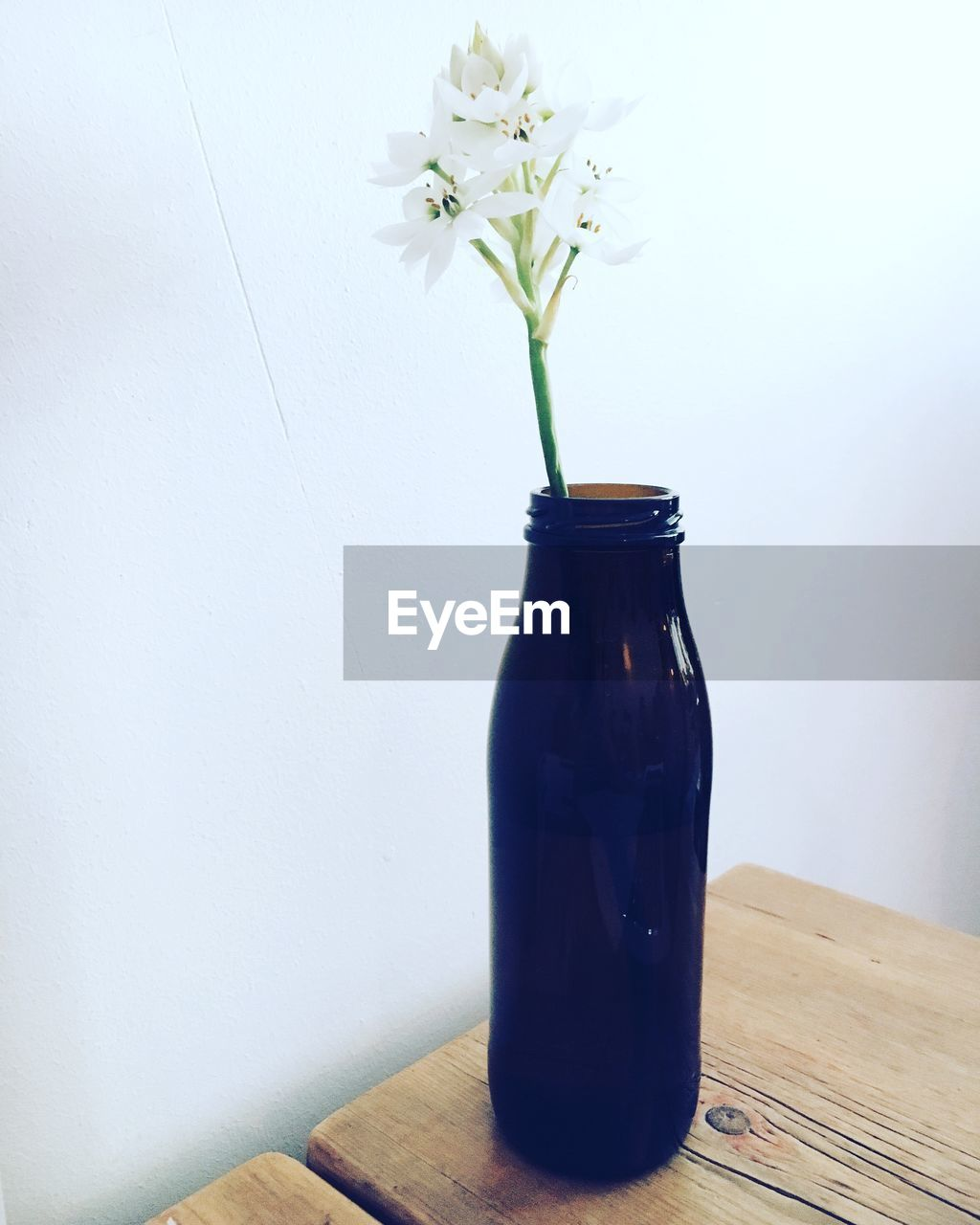 table, vase, flower, jar, no people, freshness, indoors, growth, nature, close-up, beauty in nature, fragility, day, flower head
