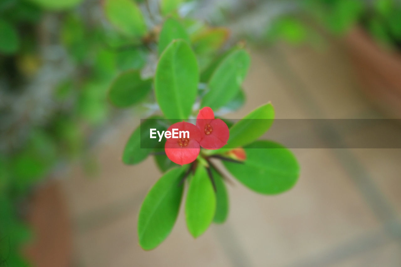 green color, growth, plant, leaf, nature, flower, petal, fragility, close-up, focus on foreground, freshness, no people, beauty in nature, flower head, day, outdoors, periwinkle