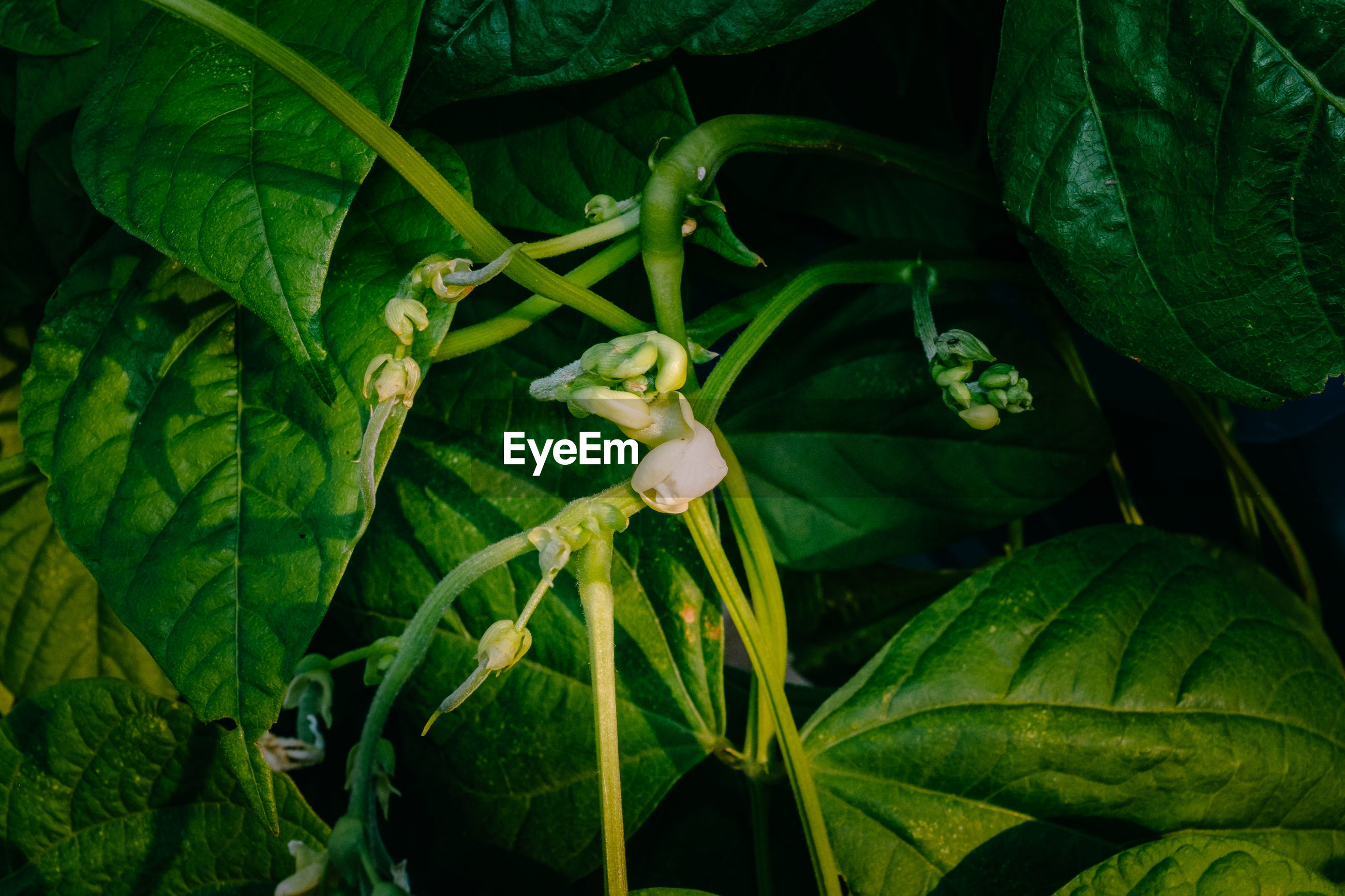 High angle view of flower buds