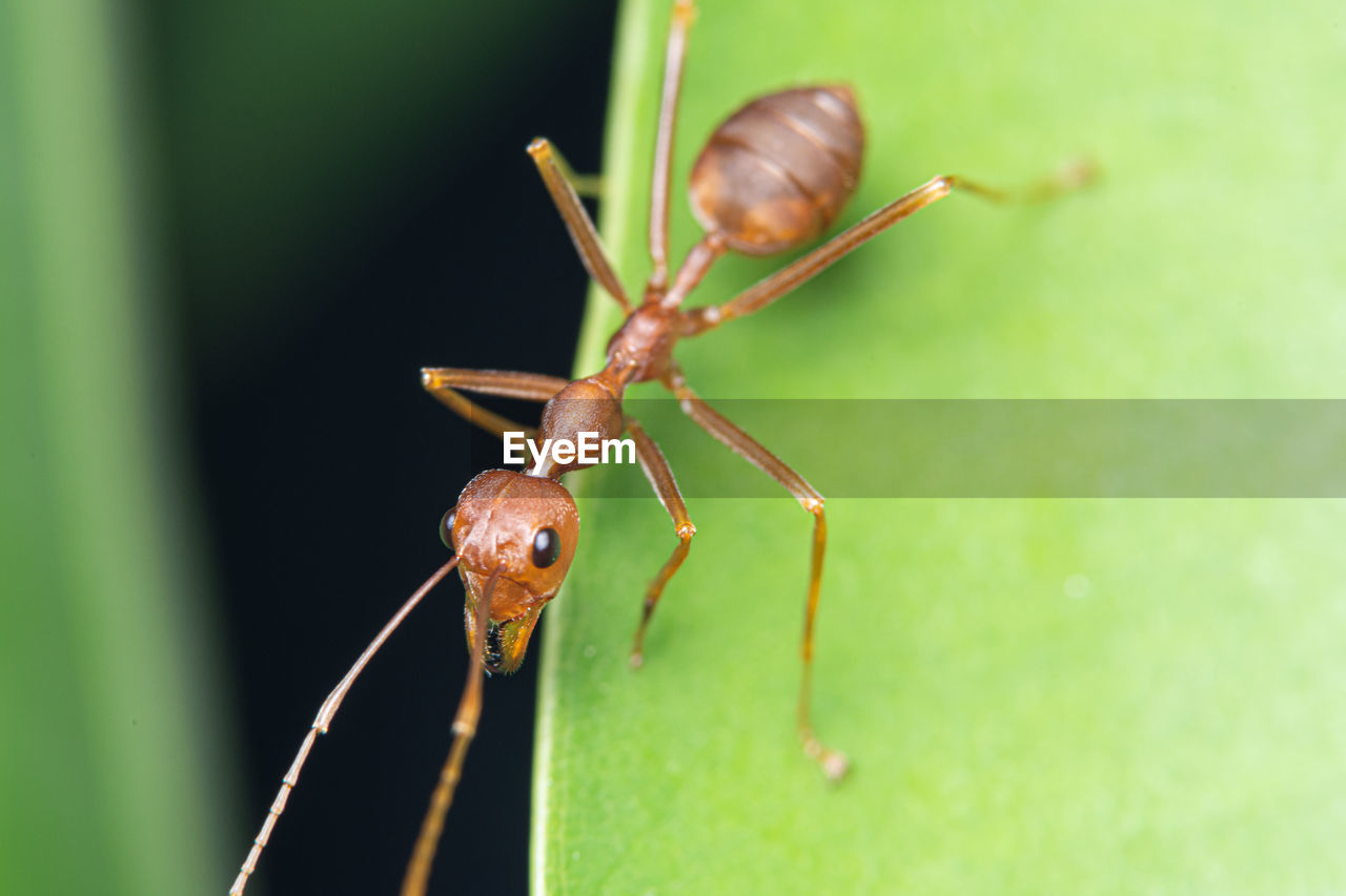 invertebrate, animal themes, animal, animal wildlife, one animal, insect, animals in the wild, close-up, green color, zoology, nature, no people, animal body part, day, plant, focus on foreground, animal antenna, outdoors, selective focus, arthropod, animal eye