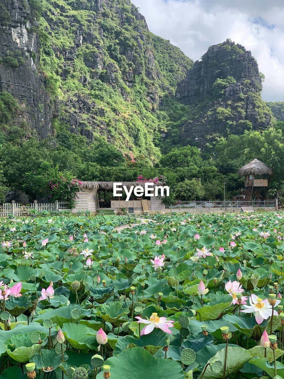 VIEW OF FLOWERING PLANTS AGAINST WATER
