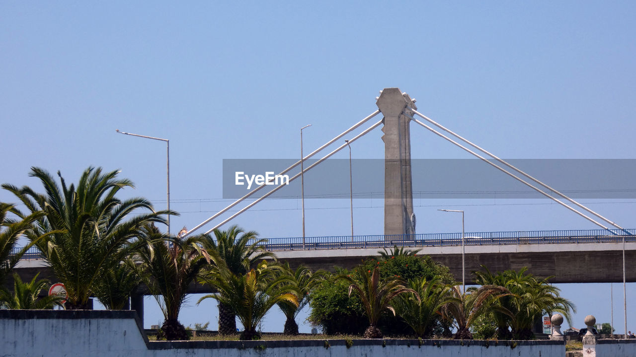 sky, tree, built structure, plant, architecture, palm tree, tropical climate, nature, clear sky, water, bridge, connection, bridge - man made structure, no people, transportation, outdoors, day, suspension bridge, city, luxury