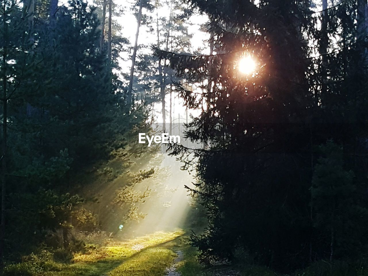 sunbeam, sun, tree, nature, no people, sunlight, forest, beauty in nature, tranquility, growth, outdoors, scenics, day, sky