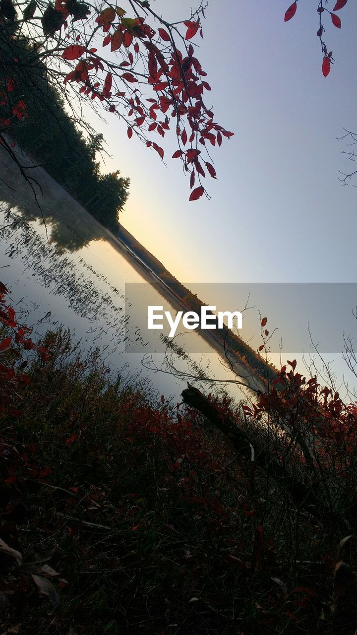 nature, tree, beauty in nature, growth, tranquil scene, tranquility, scenics, outdoors, no people, sky, lake, day, landscape, water, sunset, branch, leaf, plant, grass, foreground, low angle view, flower, clear sky
