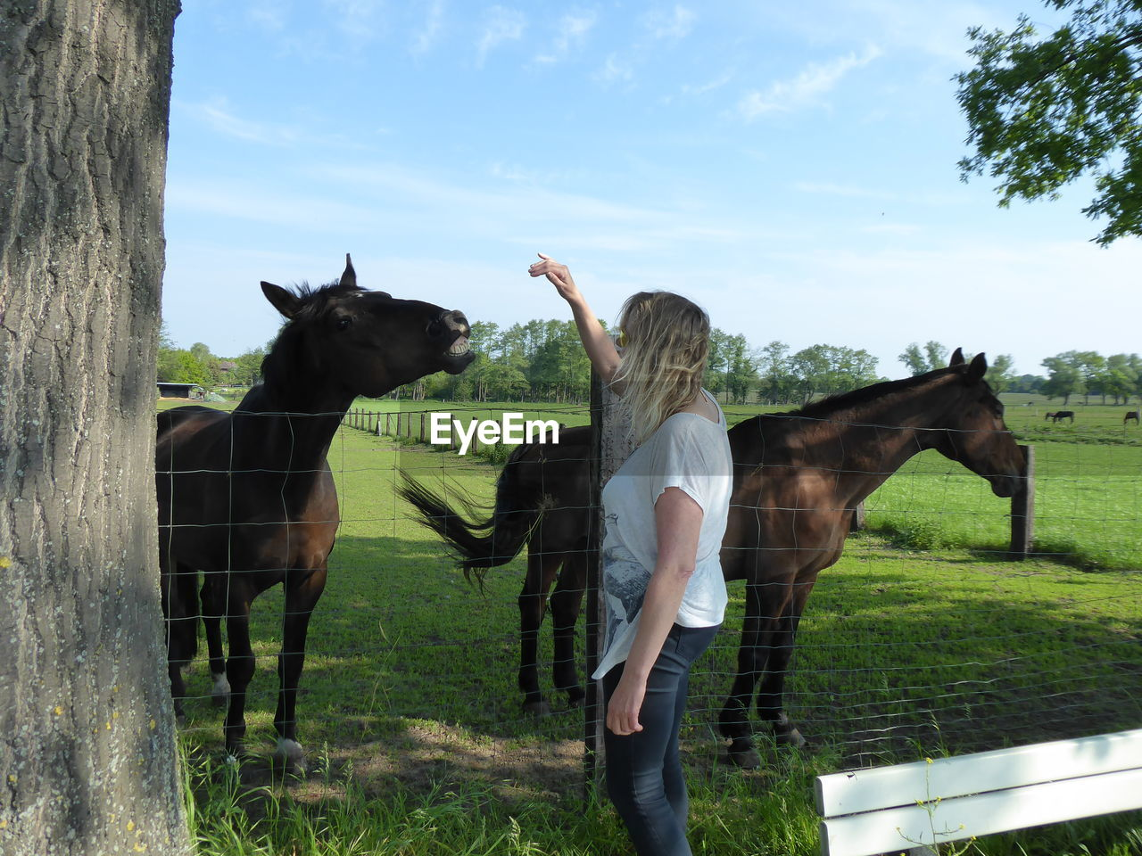 domestic animals, livestock, domestic, animal, mammal, animal themes, pets, horse, real people, vertebrate, sky, field, plant, animal wildlife, one person, group of animals, tree, leisure activity, standing, herbivorous, ranch, outdoors, human arm