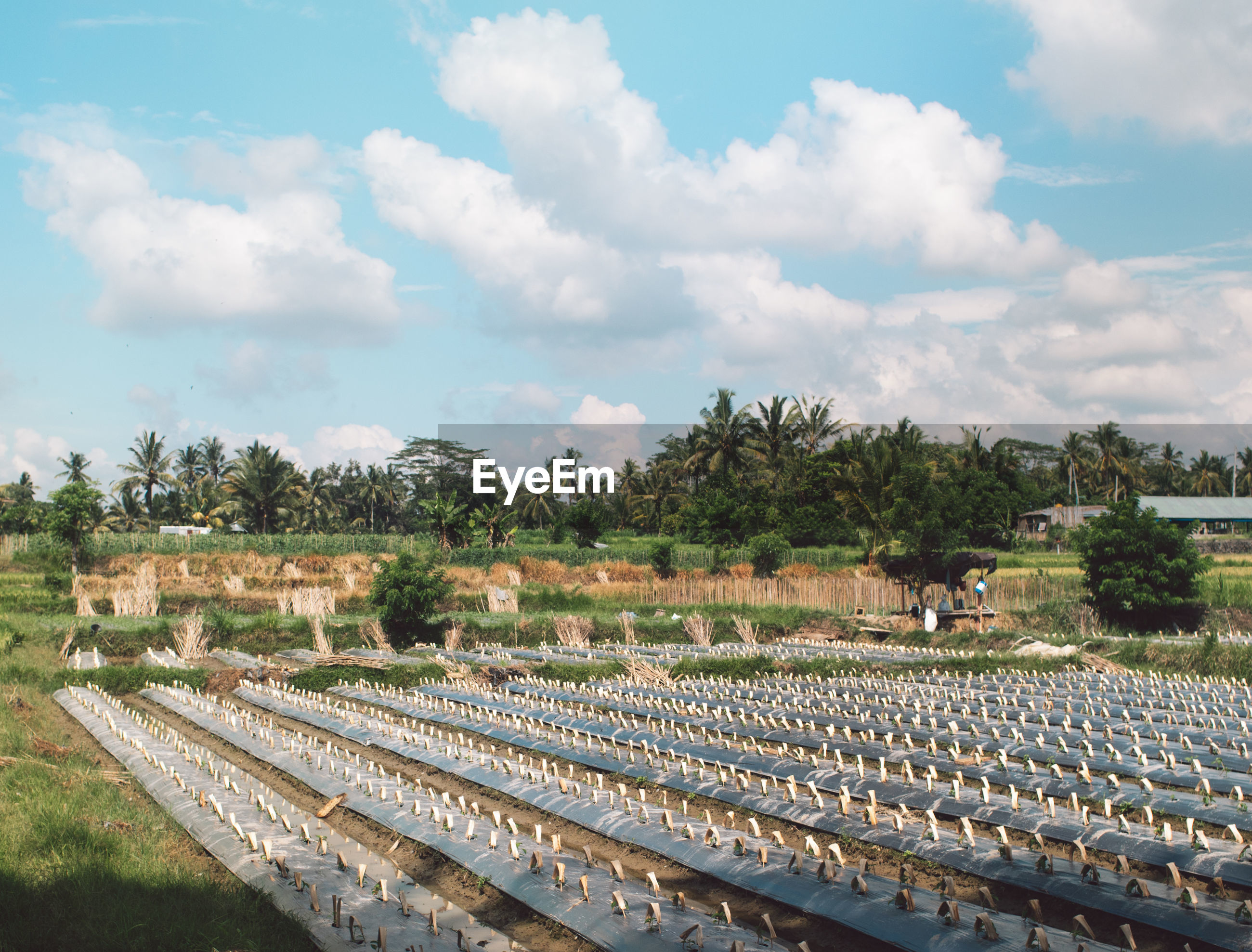 PANORAMIC SHOT OF AGRICULTURAL FIELD