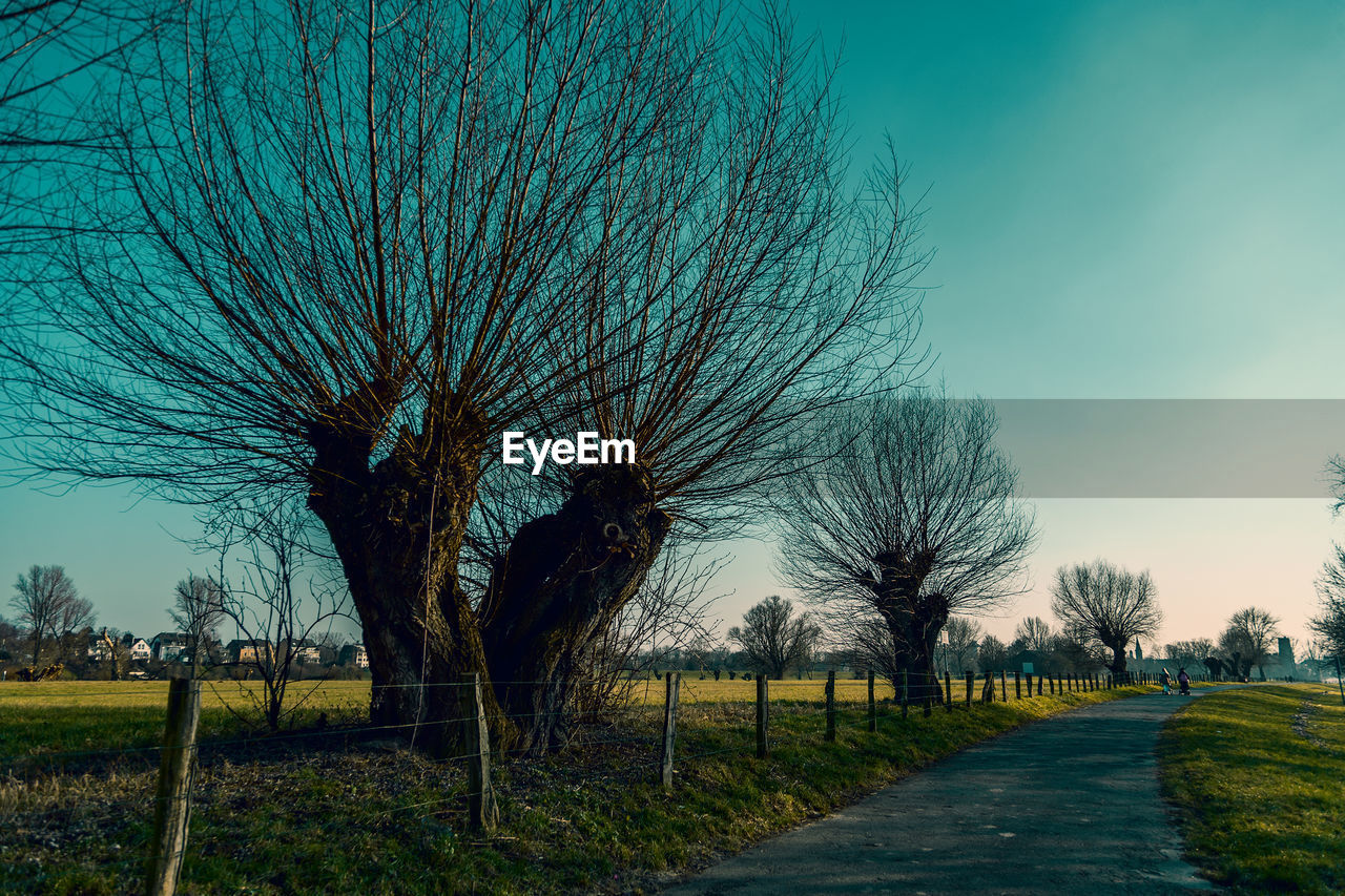plant, tree, sky, bare tree, field, landscape, tranquility, environment, no people, tranquil scene, nature, land, scenics - nature, beauty in nature, grass, the way forward, day, branch, direction, road, outdoors, treelined