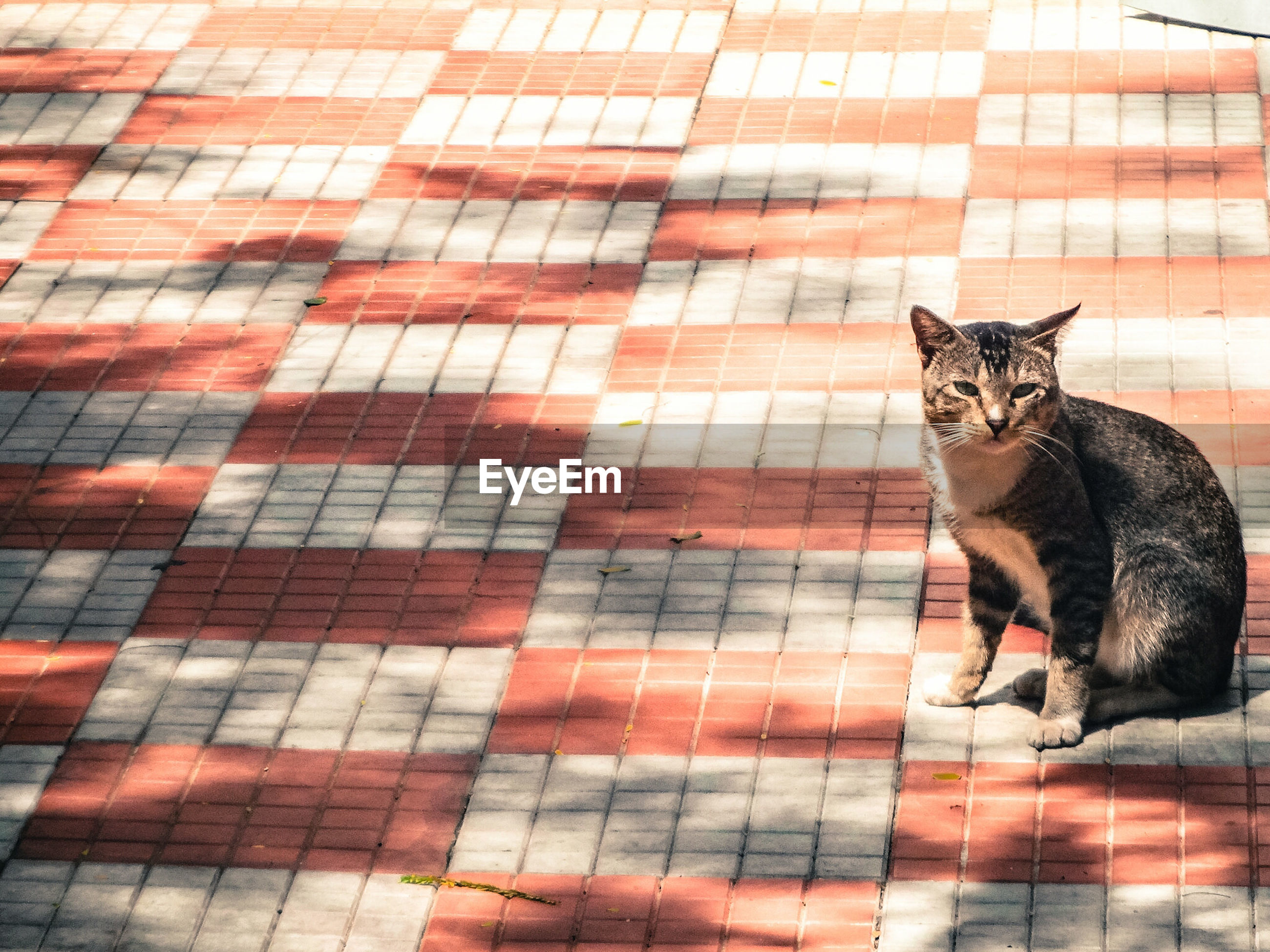 High angle view of cat sitting on paving stone street