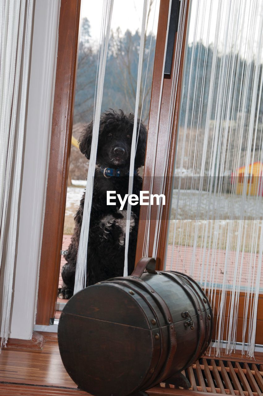 one animal, animal themes, window, no people, indoors, domestic animals, pets, day, mammal, close-up