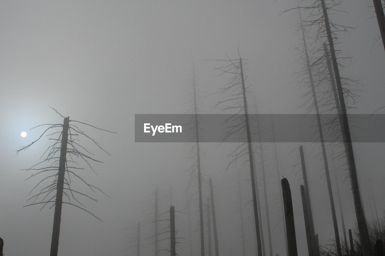 low angle view, nature, no people, outdoors, electricity, fog, technology, beauty in nature, tree, bare tree, day, electricity pylon, sky