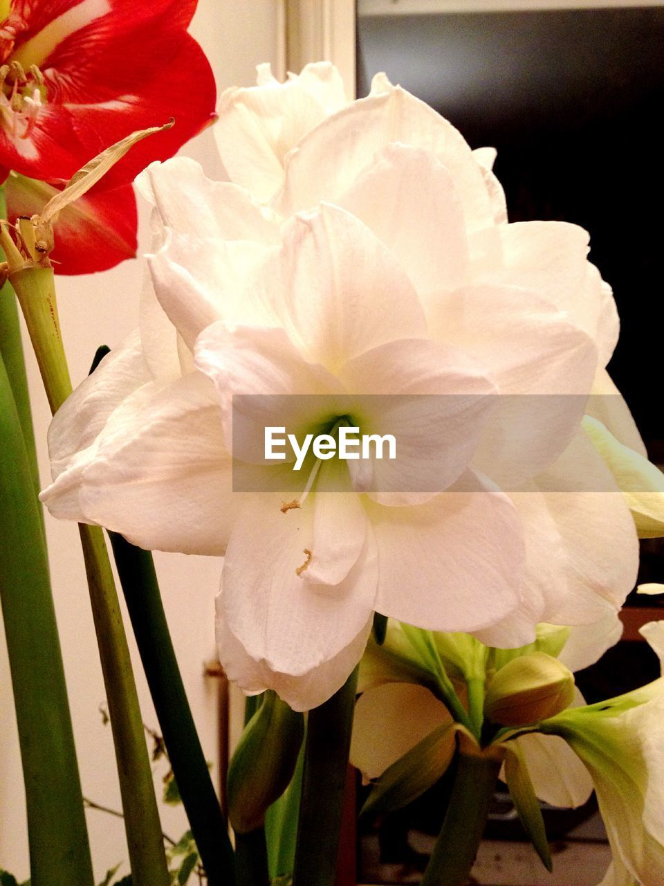 flower, petal, flower head, beauty in nature, fragility, growth, plant, nature, no people, freshness, close-up, blooming, day, outdoors