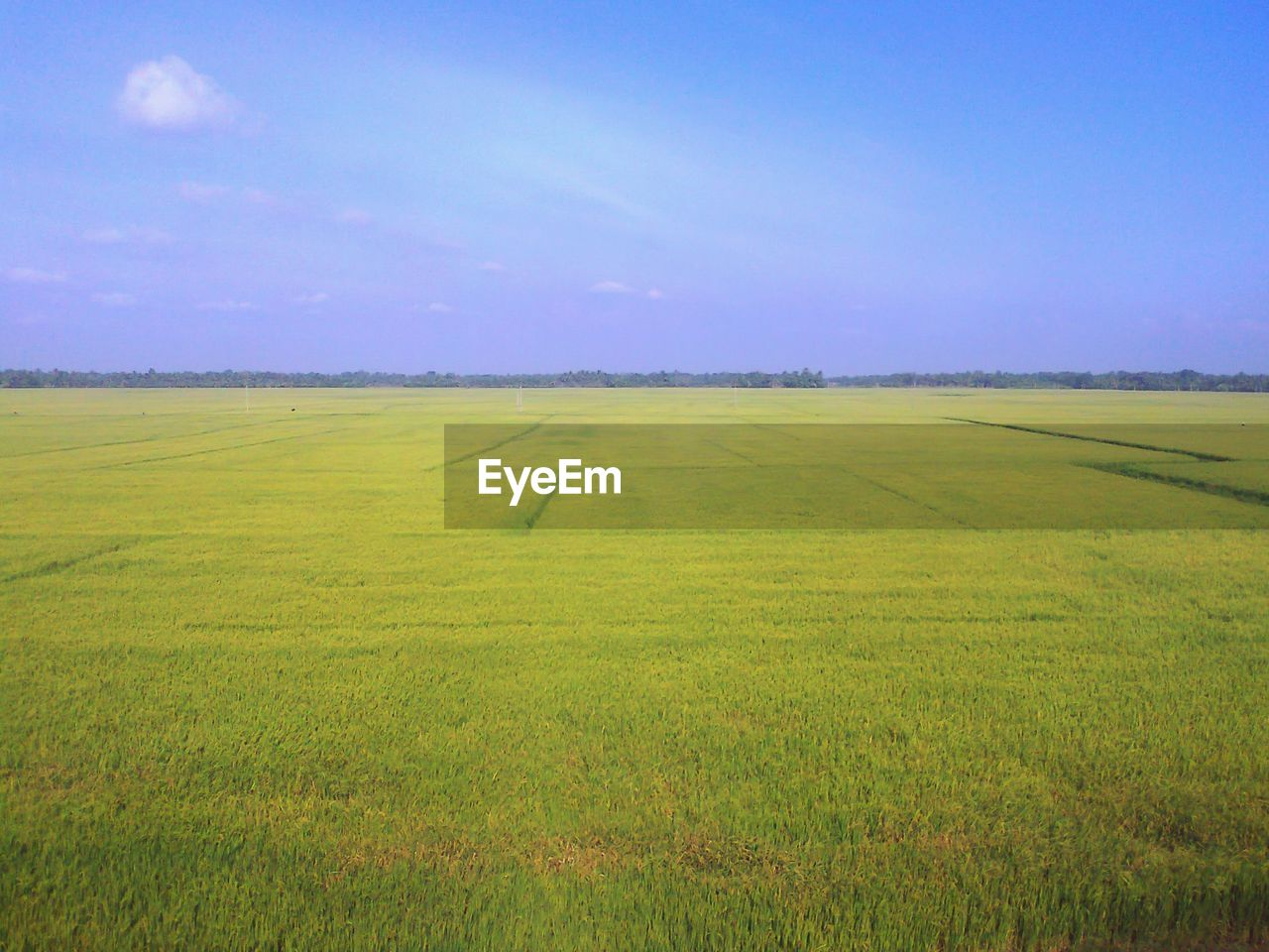 Scenic view of green agricultural field against blue sky