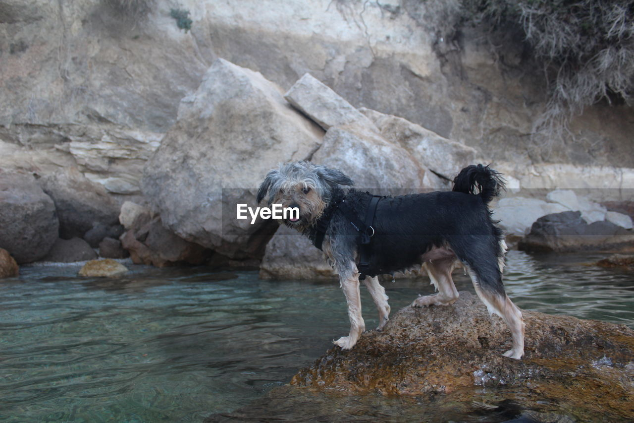 Dog on rock by river