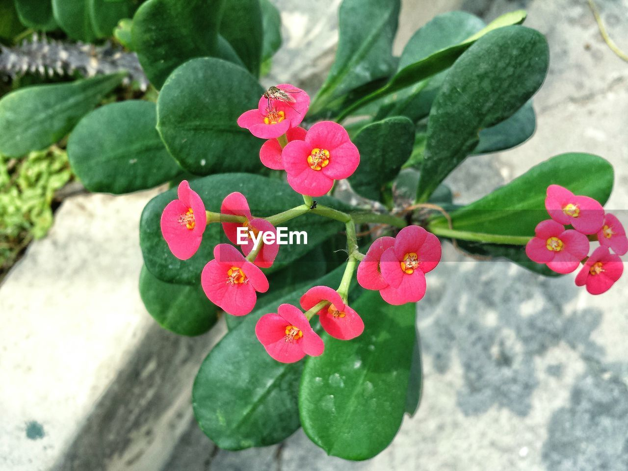 growth, flower, leaf, plant, petal, nature, beauty in nature, high angle view, green color, day, fragility, flower head, freshness, outdoors, pink color, focus on foreground, blooming, no people, close-up, periwinkle