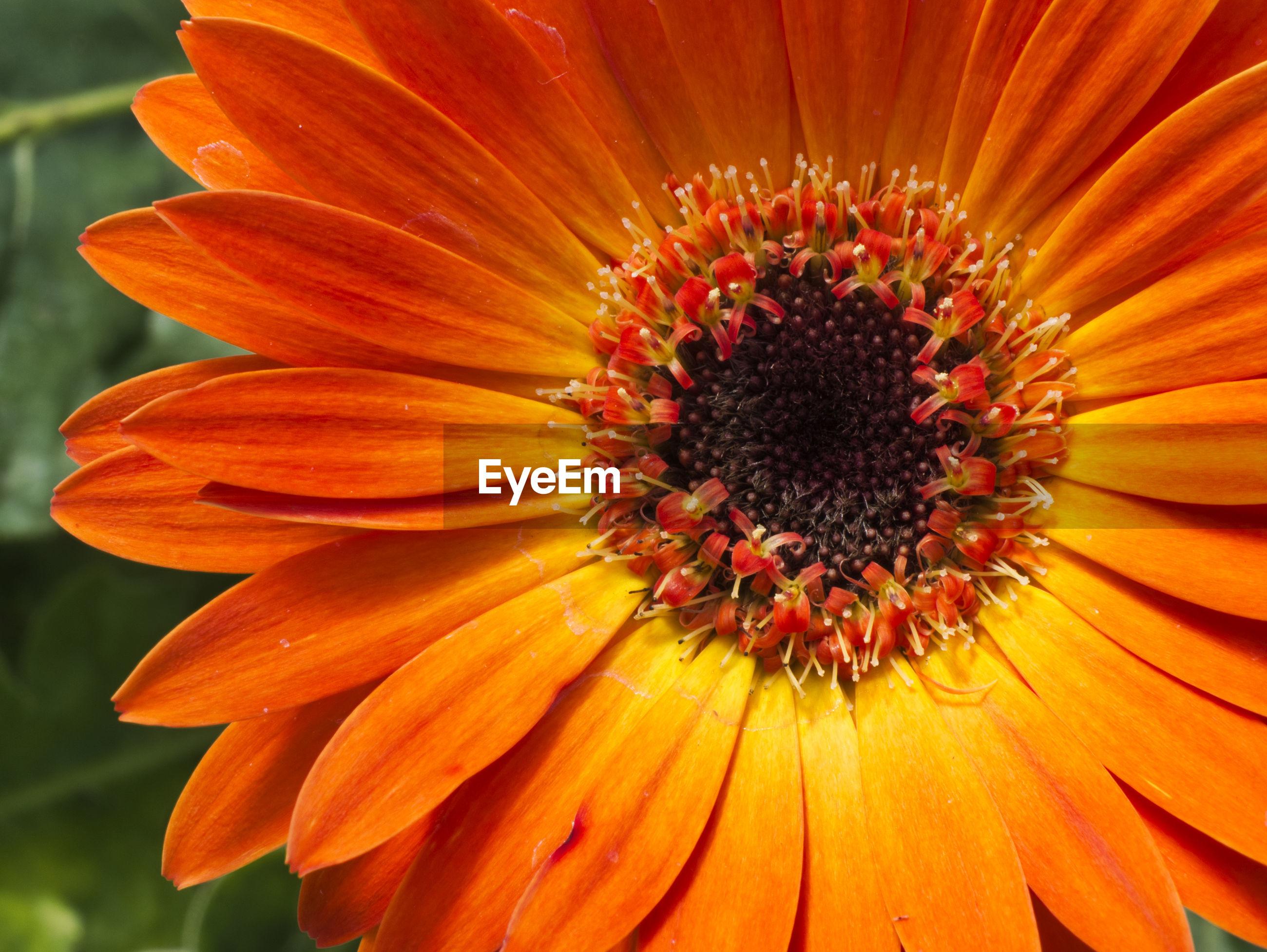 EXTREME CLOSE-UP OF ORANGE FLOWER