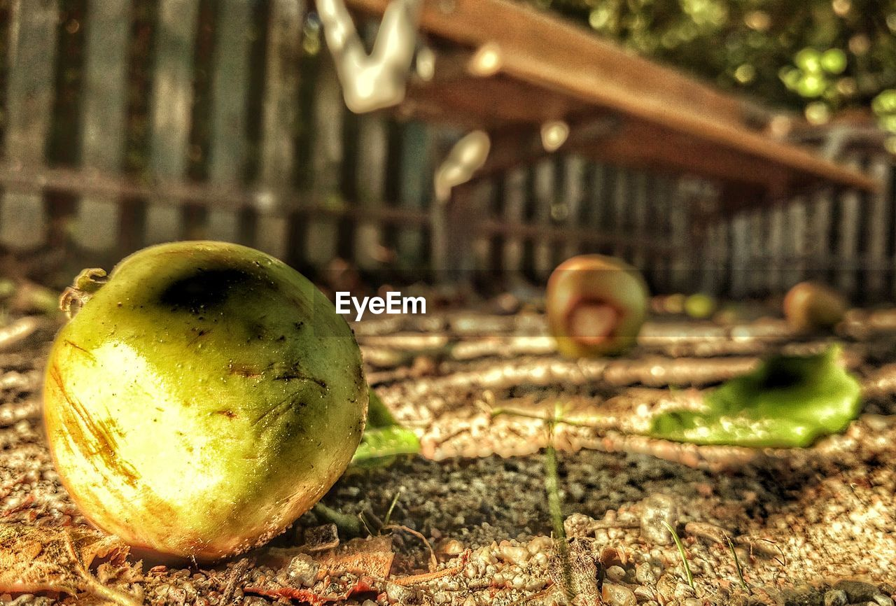 fruit, food and drink, healthy eating, food, no people, apple - fruit, freshness, focus on foreground, close-up, sunlight, outdoors, day, rotting, nature, eaten