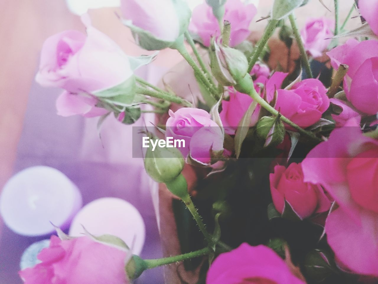 flower, pink color, petal, fragility, no people, rose - flower, freshness, close-up, beauty in nature, growth, nature, leaf, plant, flower head, day, outdoors
