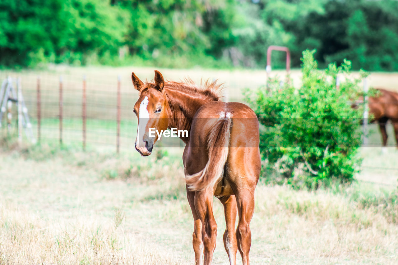 Horse standing on grass against trees