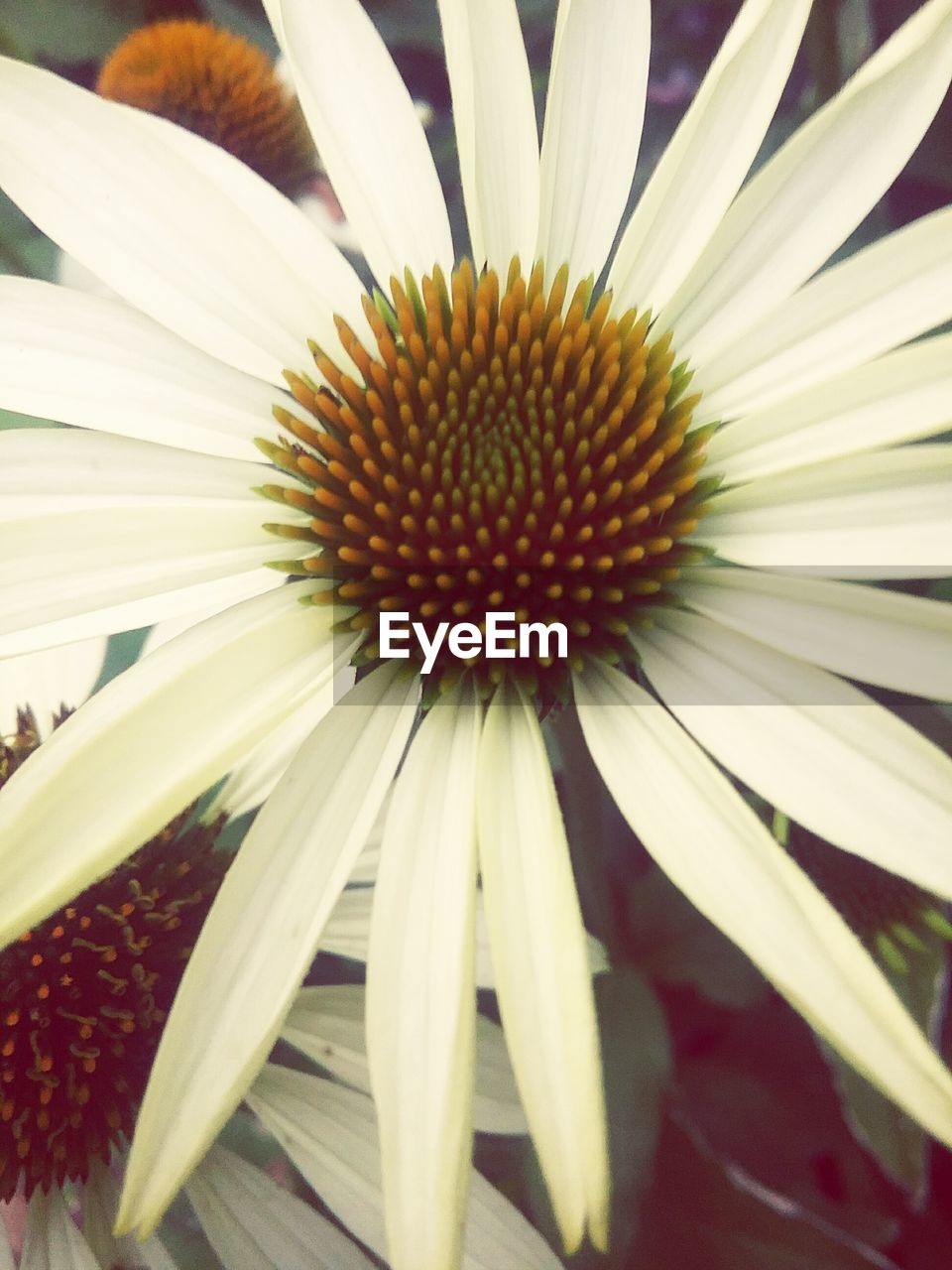 flower, fragility, petal, growth, freshness, flower head, nature, beauty in nature, no people, close-up, red, plant, day, outdoors, blooming