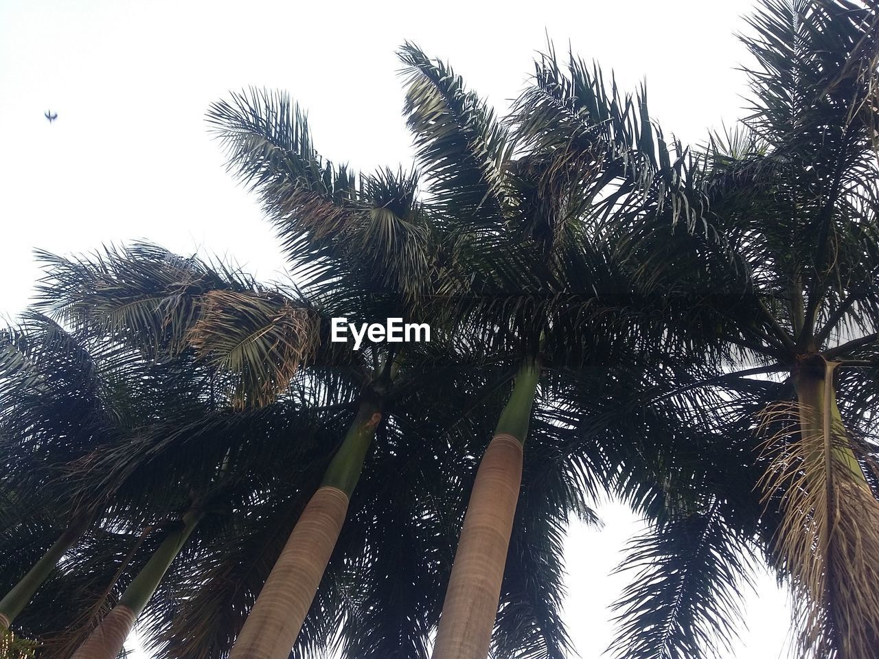 low angle view, tree, palm tree, growth, nature, sky, tree trunk, no people, outdoors, beauty in nature, green color, day