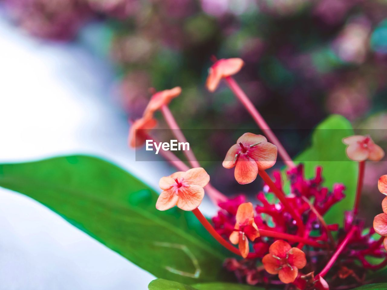 growth, beauty in nature, freshness, fragility, nature, flower, petal, focus on foreground, day, no people, plant, outdoors, close-up, flower head, blooming, leaf