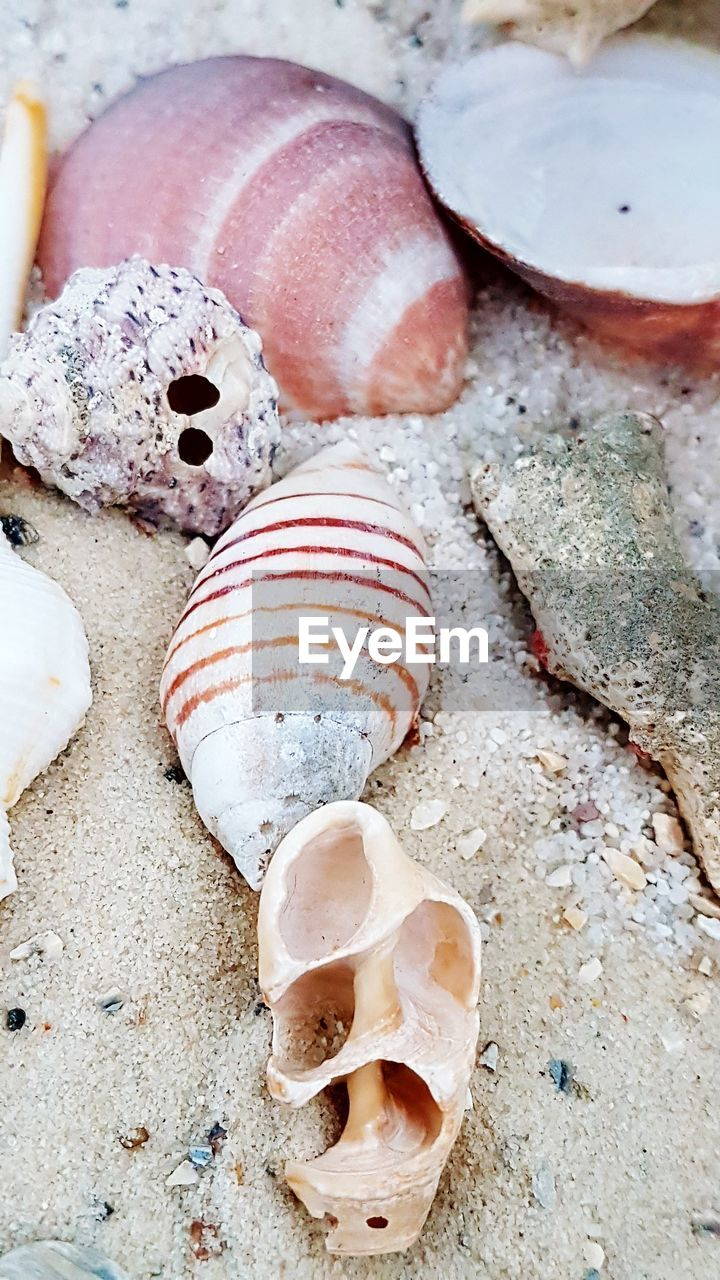 animal shell, seashell, fossil, close-up, no people, nature, outdoors, day