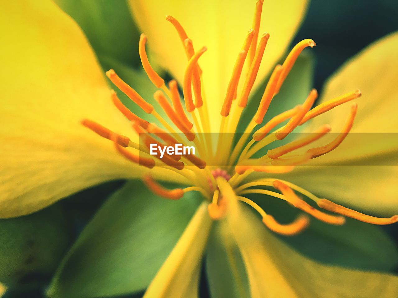 flower, growth, beauty in nature, nature, petal, fragility, freshness, plant, flower head, yellow, close-up, no people, outdoors, blooming, springtime, day