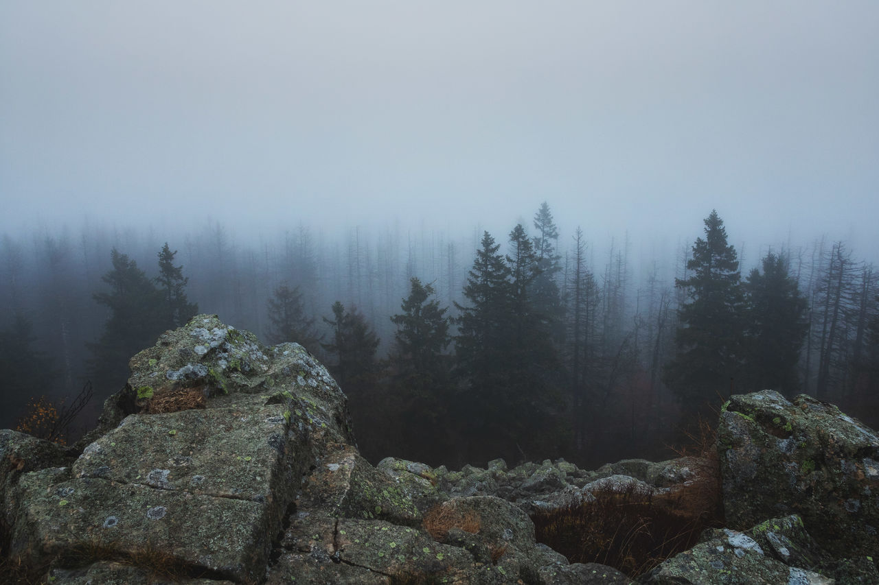 View Of Trees And Rocks Against Sky