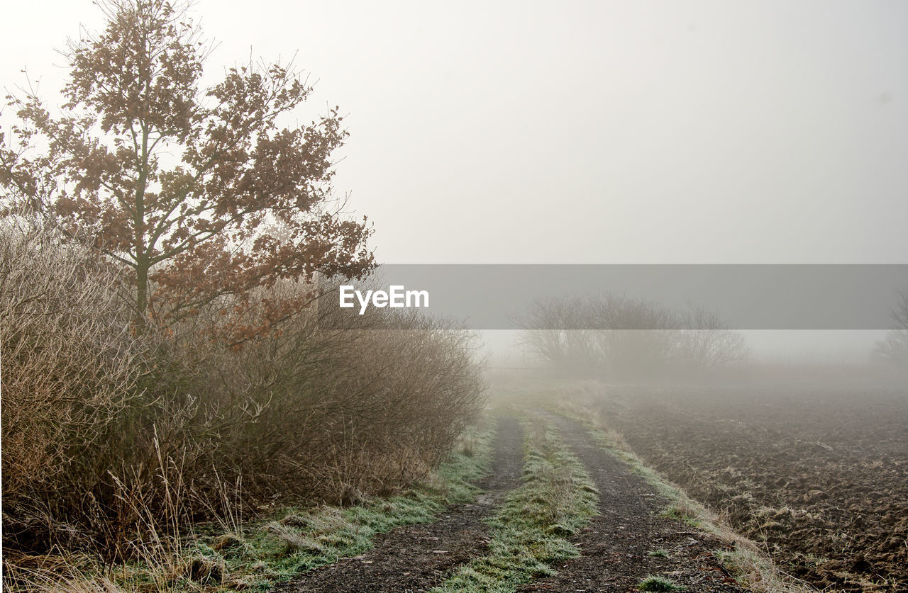 Empty Footpath During Foggy Weather