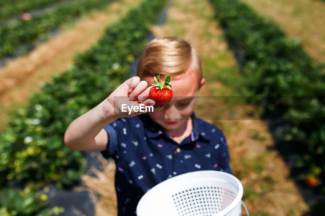 High angle view of boy holding strawberry
