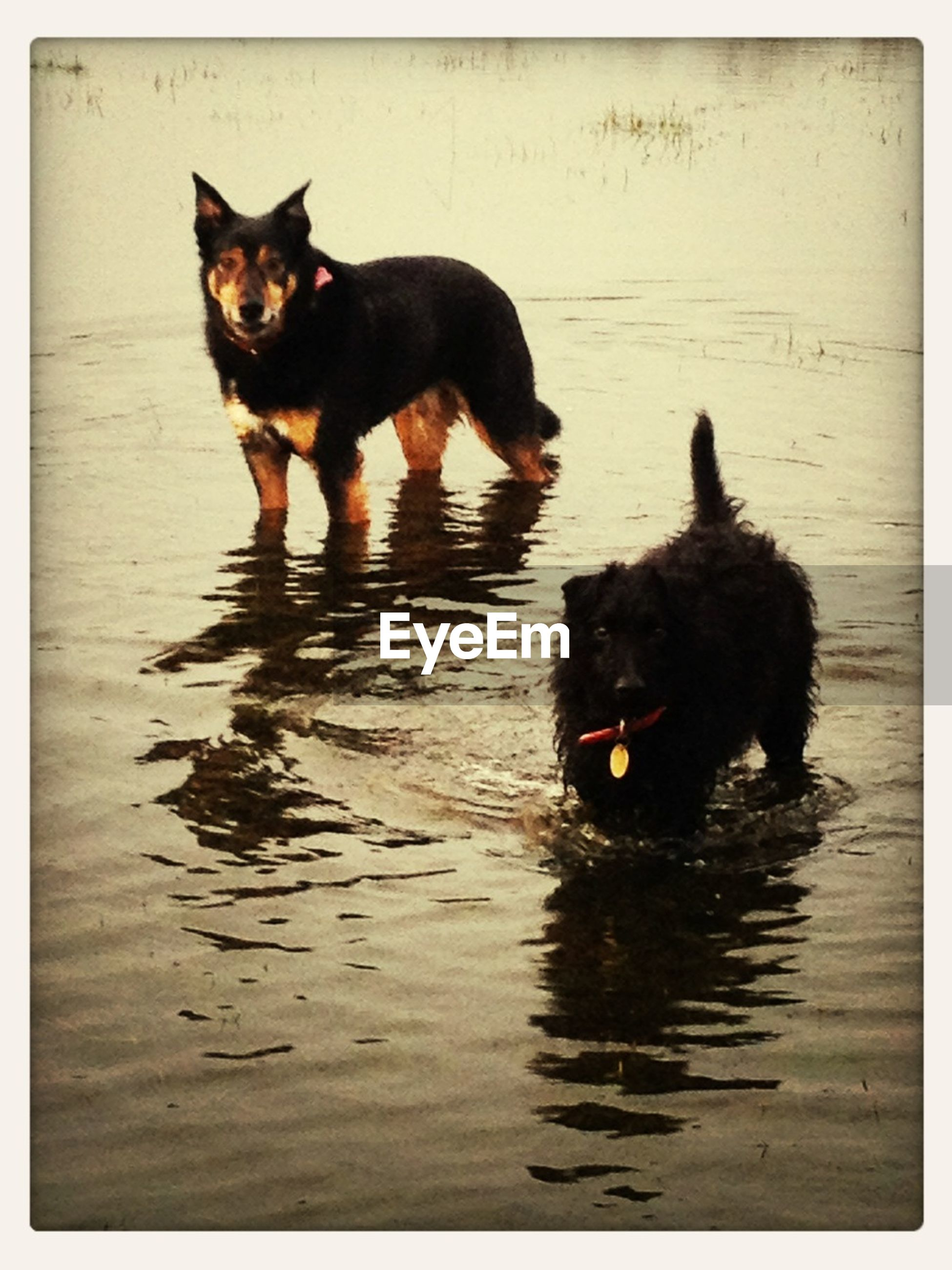 pets, domestic animals, animal themes, mammal, one animal, black color, transfer print, portrait, looking at camera, two animals, cat, domestic cat, auto post production filter, black, water, zoology, animal, sitting, full length, dog