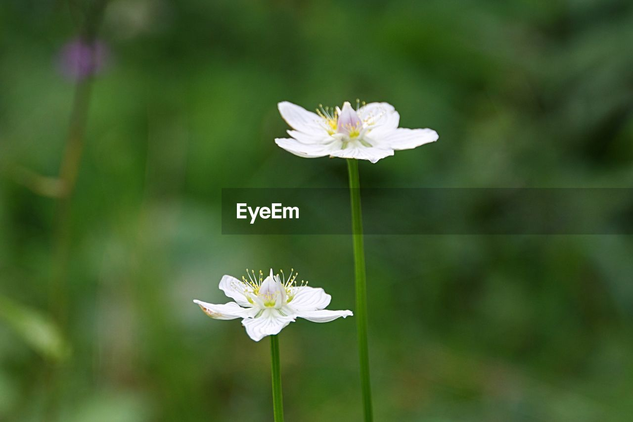 flower, white color, growth, nature, fragility, flower head, petal, freshness, beauty in nature, day, blooming, focus on foreground, outdoors, plant, no people, close-up