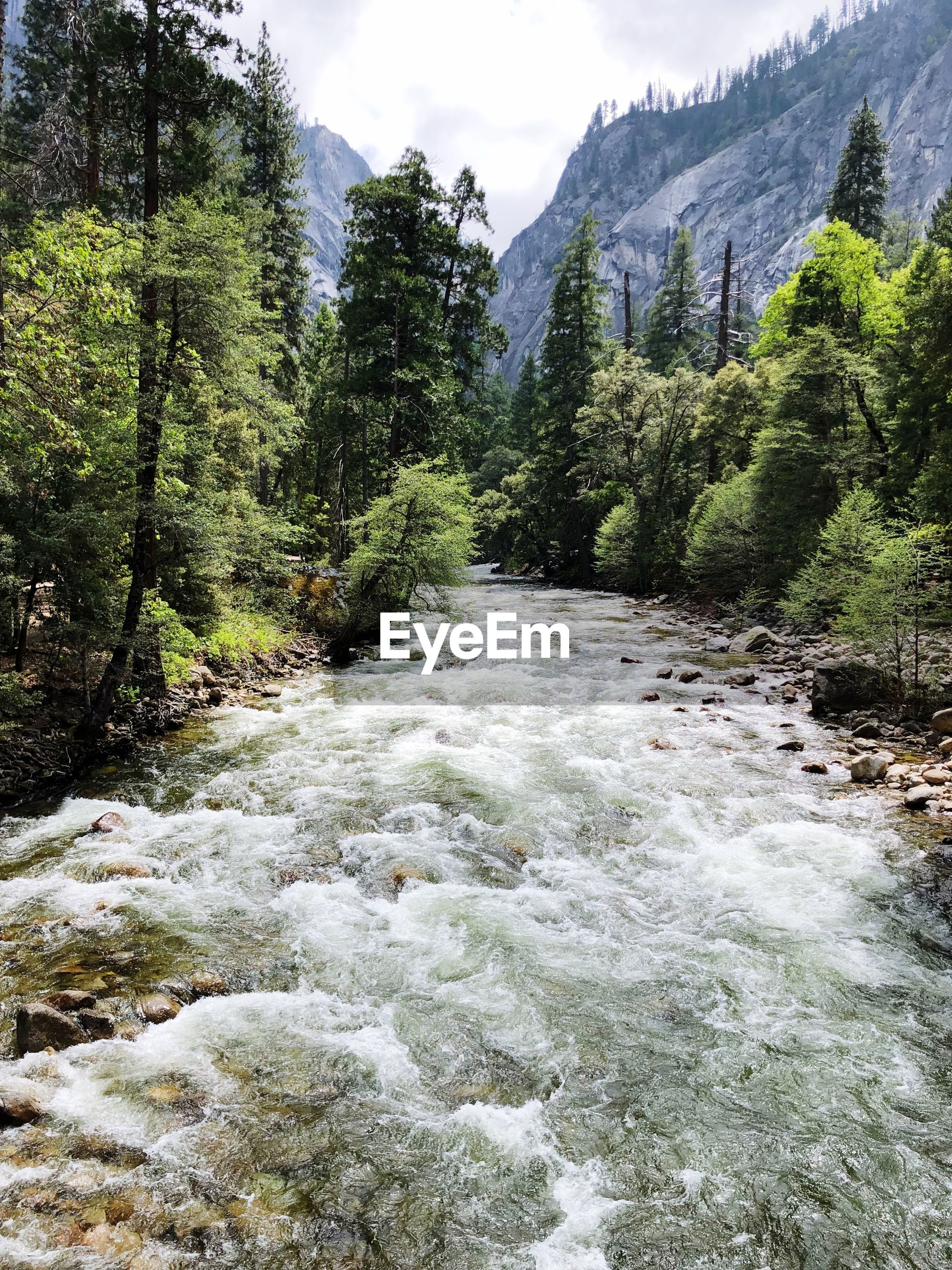 VIEW OF RIVER FLOWING THROUGH FOREST