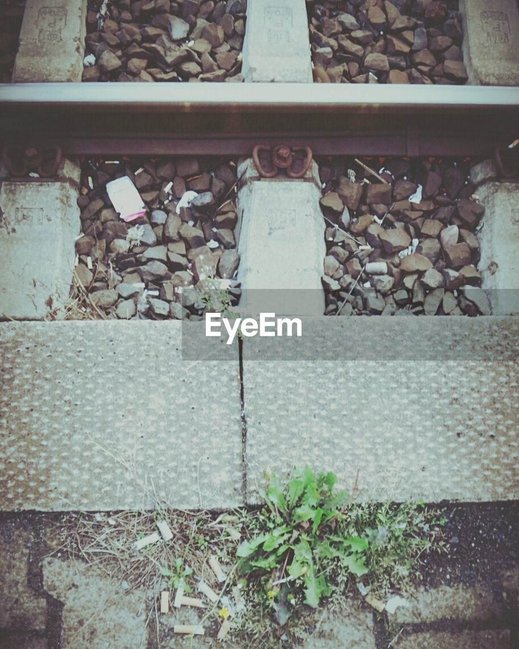 no people, day, leaf, outdoors, railroad track, plant, close-up, nature
