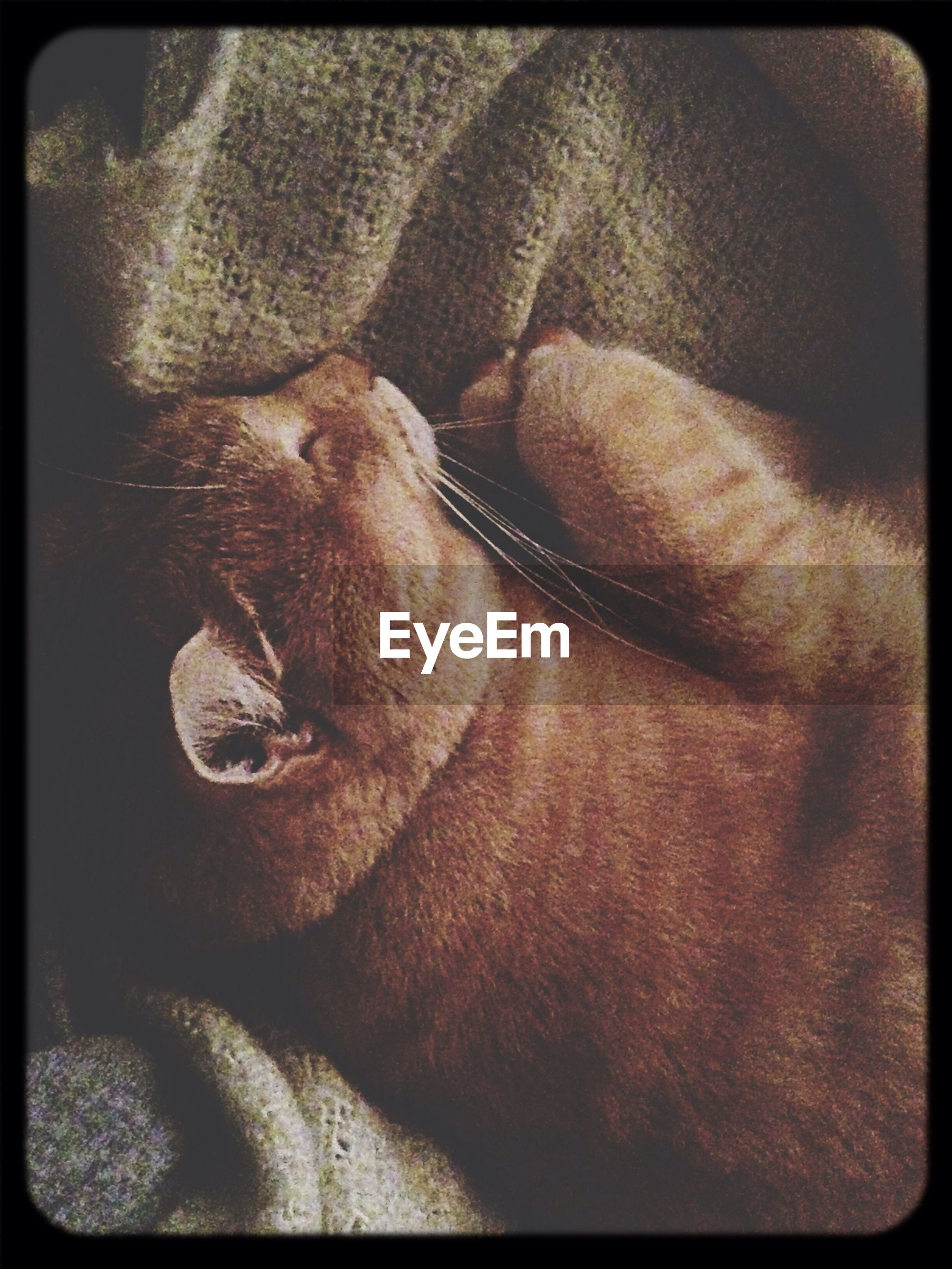 transfer print, auto post production filter, one animal, close-up, animal themes, part of, indoors, person, pets, relaxation, dog, domestic animals, mammal, lifestyles, unrecognizable person, men, high angle view
