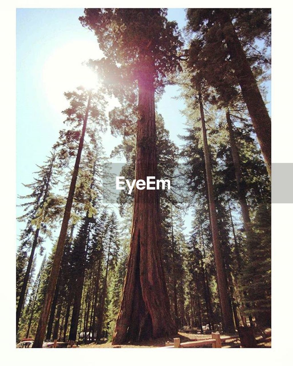 tree, tree trunk, forest, nature, day, low angle view, no people, growth, tranquility, outdoors, beauty in nature, sky, close-up