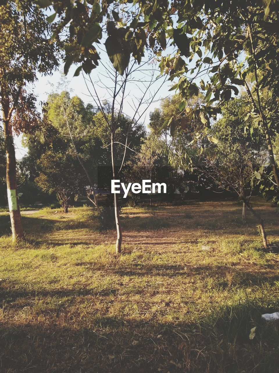 tree, plant, land, tranquility, growth, nature, day, forest, tranquil scene, grass, field, no people, beauty in nature, environment, landscape, sunlight, outdoors, non-urban scene, scenics - nature, green color