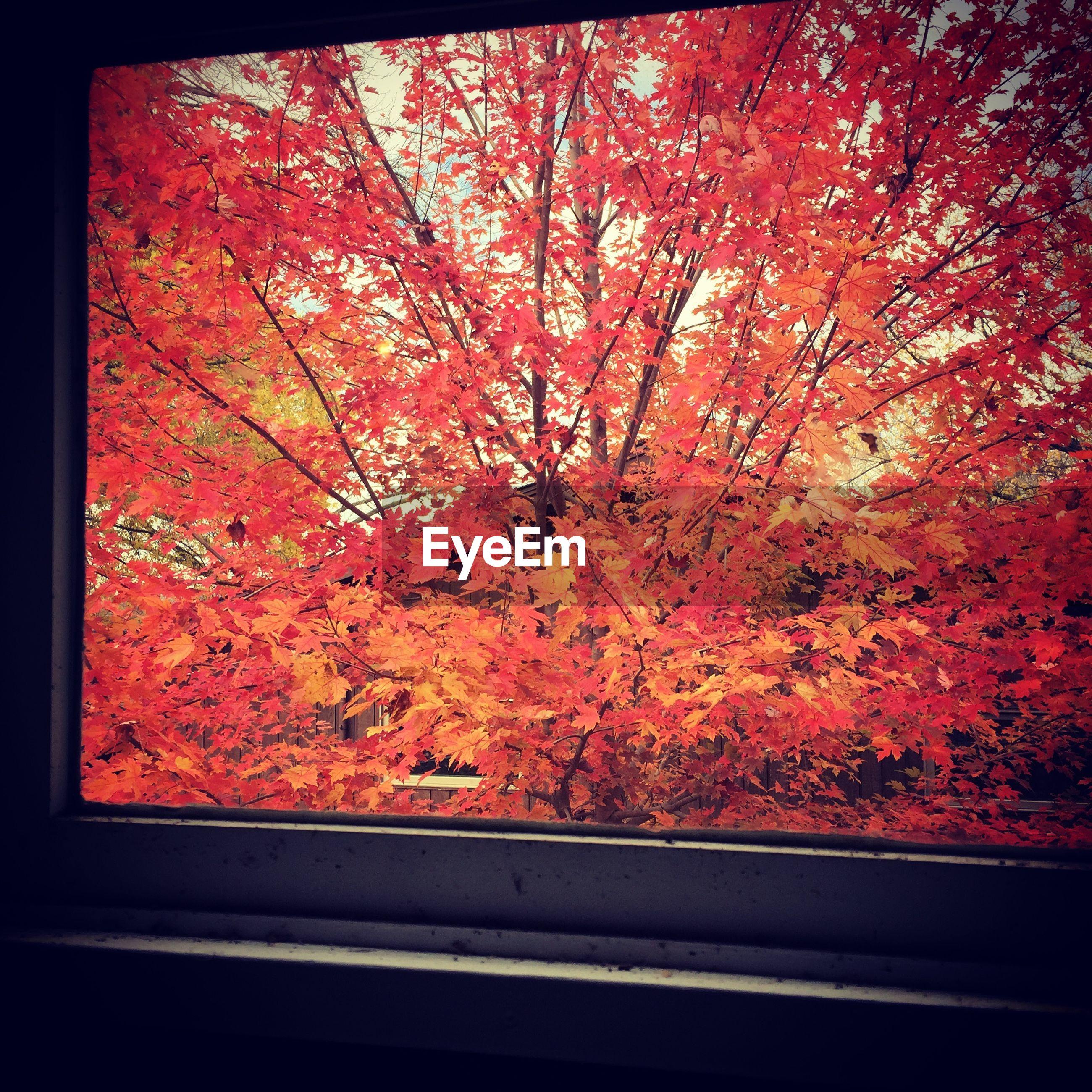 Trees seen through window during autumn