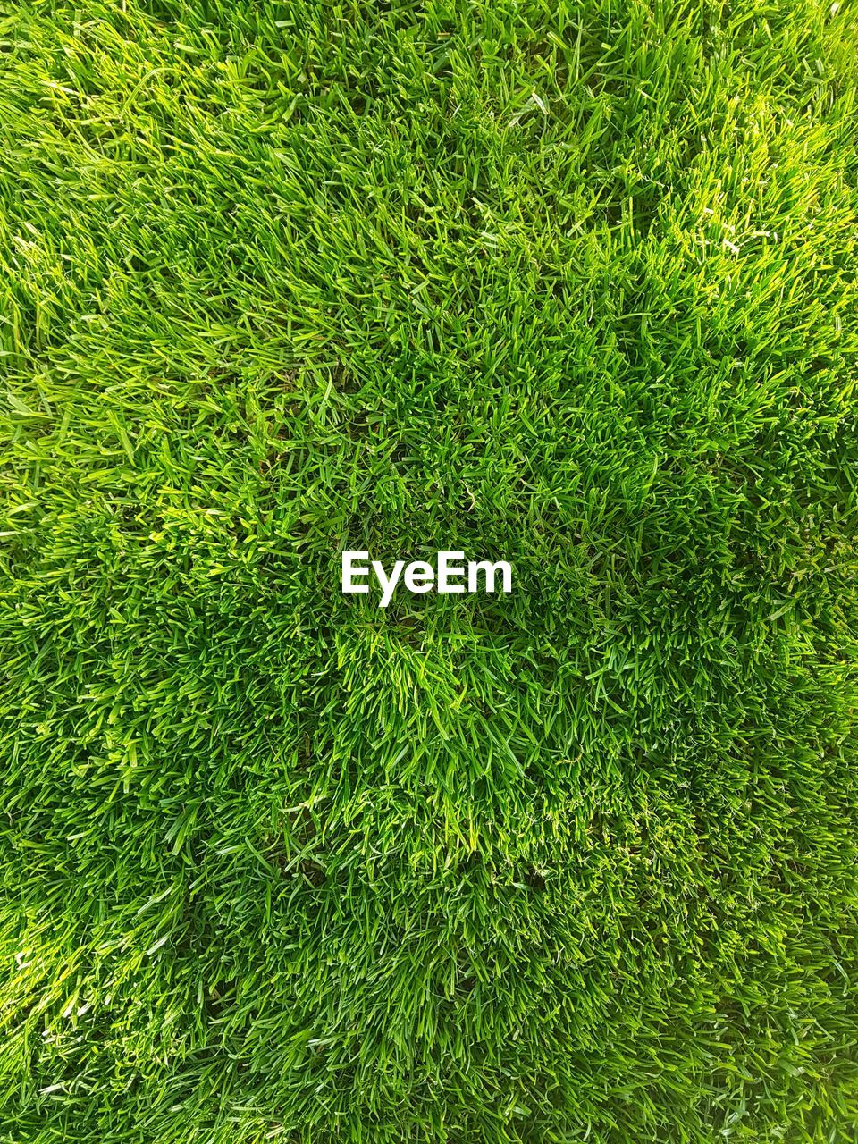 green color, plant, full frame, growth, grass, backgrounds, nature, beauty in nature, no people, day, land, foliage, lush foliage, field, high angle view, outdoors, tranquility, close-up, lawn, sunlight