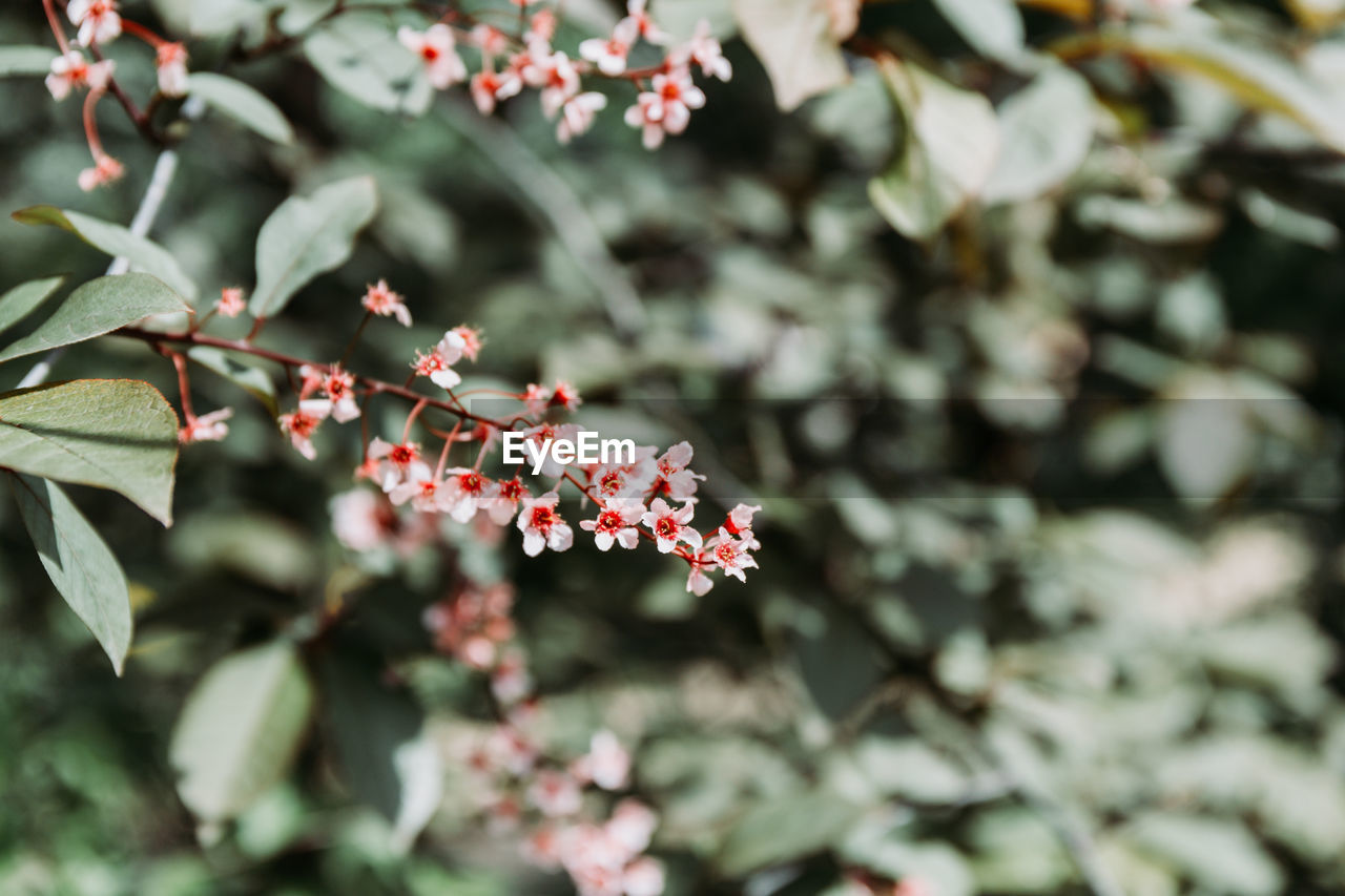 growth, plant, beauty in nature, flower, freshness, flowering plant, plant part, selective focus, fragility, leaf, day, vulnerability, nature, no people, close-up, focus on foreground, outdoors, green color, petal, pink color, flower head