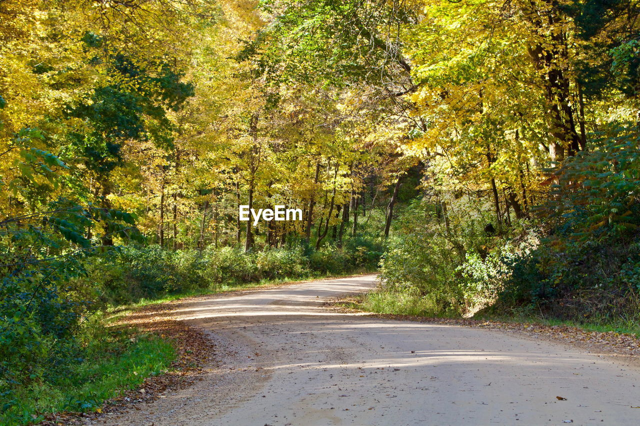 COUNTRY ROAD AMIDST TREES DURING AUTUMN
