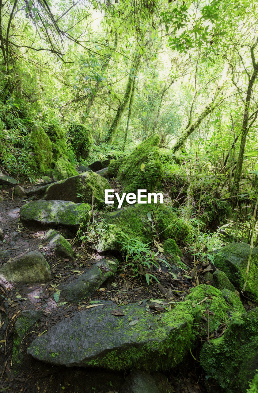 forest, plant, tree, land, green color, beauty in nature, tranquility, nature, growth, woodland, day, water, moss, no people, lush foliage, foliage, solid, plant part, tranquil scene, rock, outdoors, rainforest, stream - flowing water, flowing