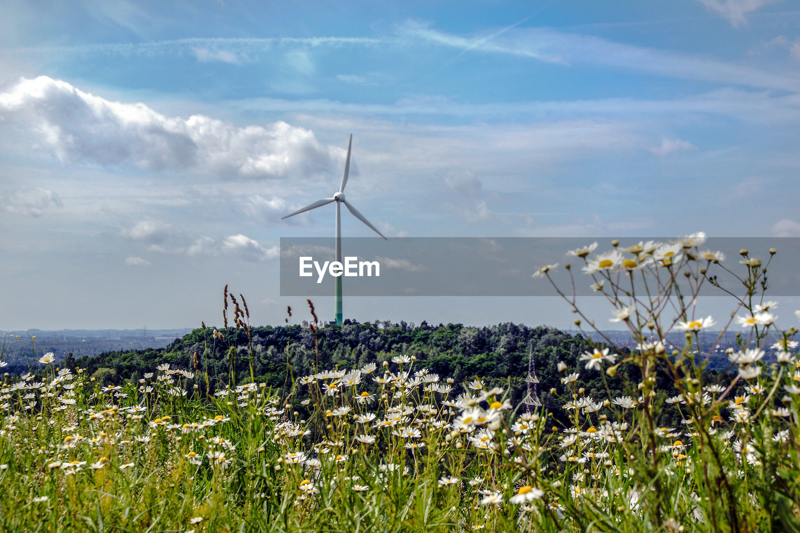 Plants growing on field against sky, wind turbine