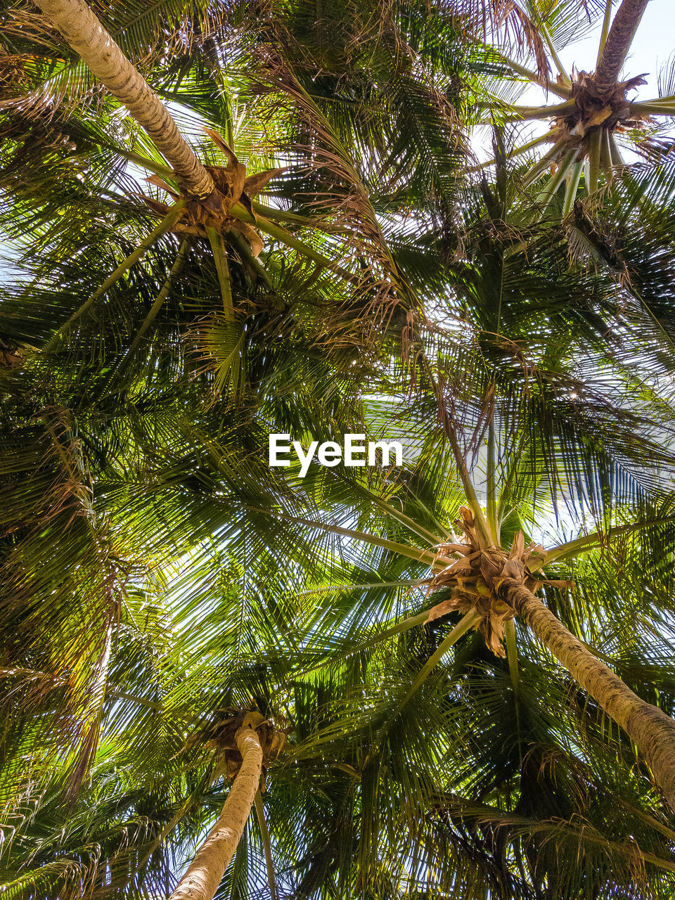plant, tree, palm tree, low angle view, growth, tropical climate, no people, trunk, nature, tree trunk, day, beauty in nature, outdoors, green color, close-up, leaf, branch, plant part, backgrounds, tall - high, palm leaf, coconut palm tree, directly below, tropical tree, tree canopy