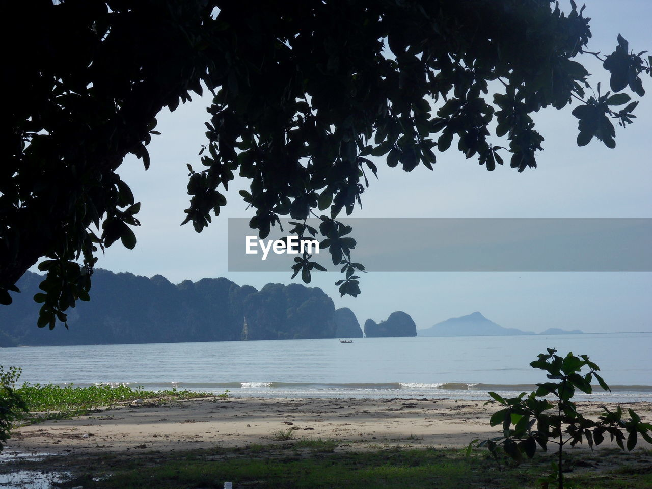tree, sea, nature, water, beauty in nature, scenics, tranquility, beach, outdoors, sky, tranquil scene, day, mountain, growth, sand, no people, branch