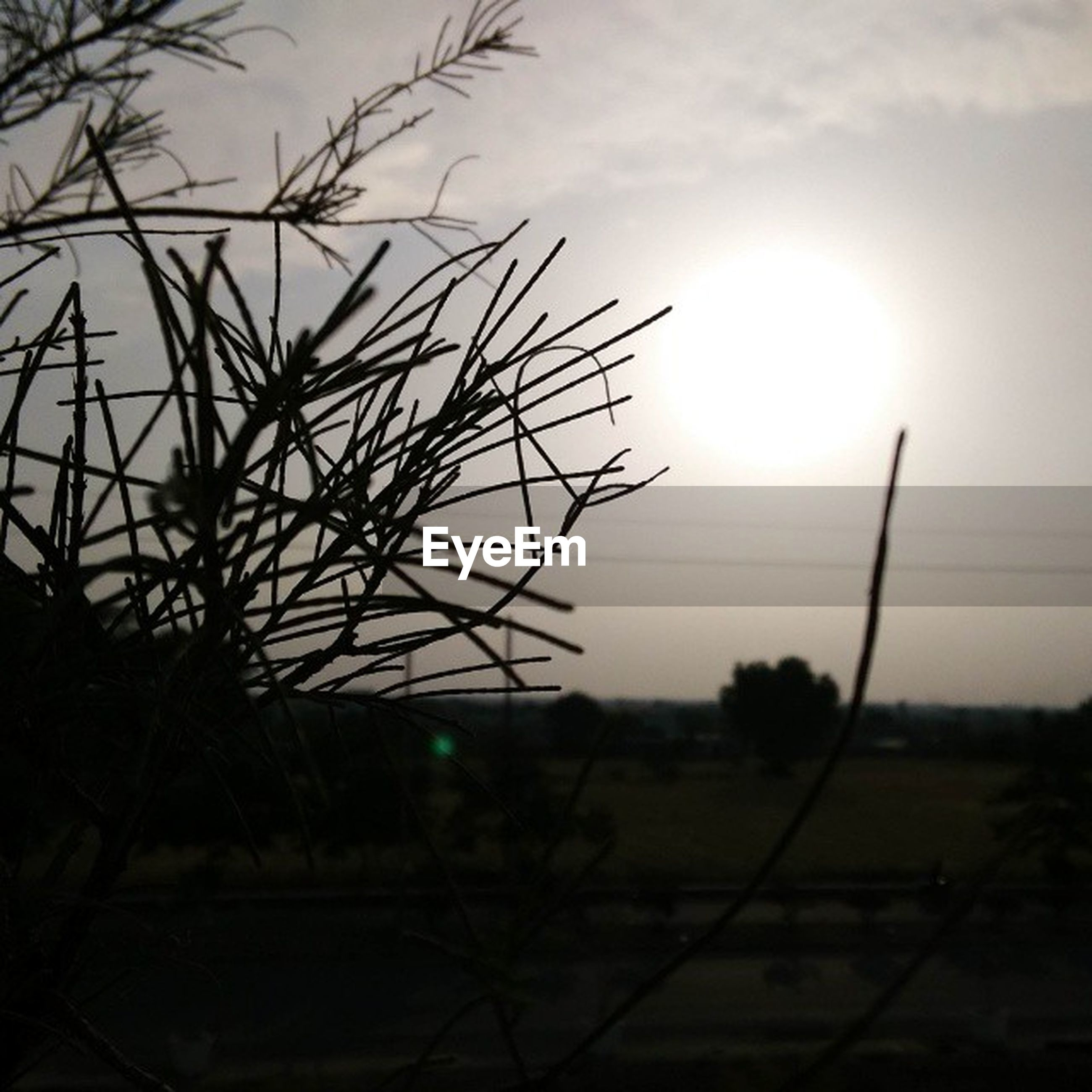 sun, sunset, silhouette, sky, nature, tranquility, field, beauty in nature, growth, tranquil scene, scenics, sunlight, plant, landscape, focus on foreground, bare tree, lens flare, outdoors, branch, close-up
