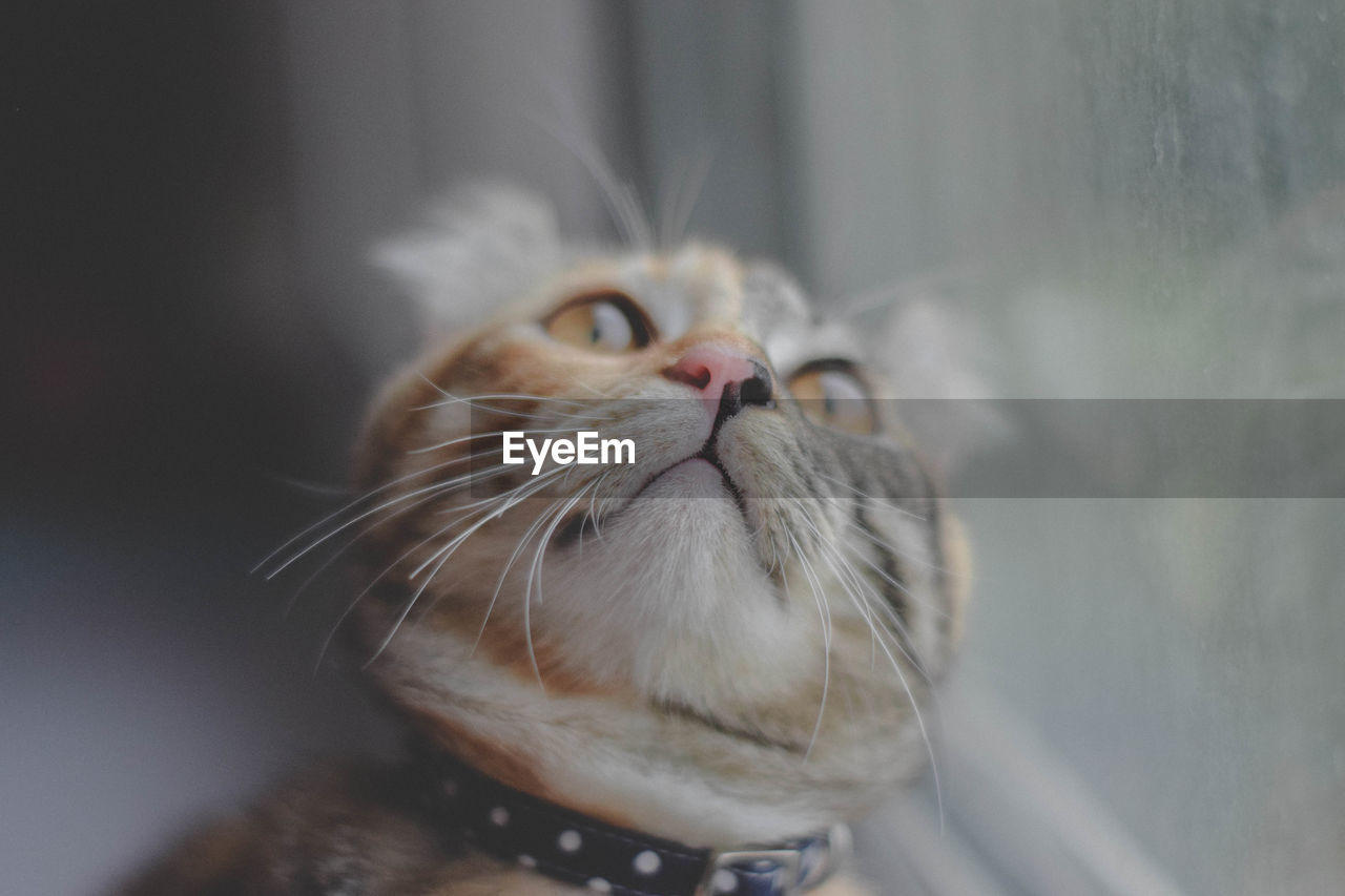 animal themes, one animal, animal, pets, domestic, cat, feline, mammal, domestic cat, domestic animals, vertebrate, whisker, close-up, no people, looking, indoors, animal body part, focus on foreground, animal head, portrait, persian cat, animal eye